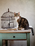 Pretend Posters - Cat and Bird Poster by Nailia Schwarz