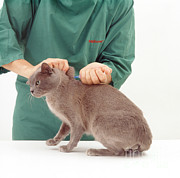 Vet Photo Posters - Cat Getting Annual Booster Shot Poster by Jane Burton