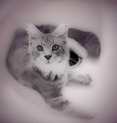 Pets Digital Art Originals - Cat in Sink by Shirley Patterson-Wallace