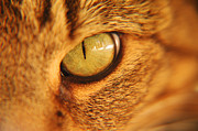 Cat Face Prints - Cats Eye Print by Micah May