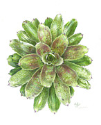 Bromeliad Drawings Prints - Celebration Print by Steve Asbell