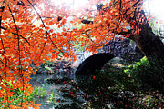 Fall Photographs Digital Art Posters - Central Park New York City Poster by Mark Ashkenazi
