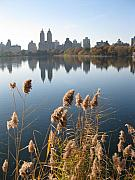 Central Framed Prints - Central Park Framed Print by Yannick Guerin