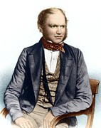 Sitting In Chair Posters - Charles Darwin, British Naturalist Poster by Sheila Terry