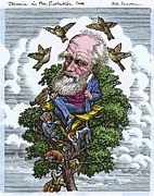 Origin Posters - Charles Darwin In His Evolutionary Tree Poster by Bill Sanderson