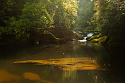 North Carolina Mountains Posters - Chattooga River at Dawn Poster by Matt Tilghman