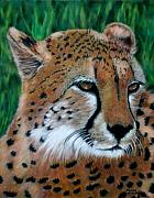 Mammals Pastels Framed Prints - Cheetah Framed Print by Carol McCarty