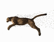 Cheetah Photos - Cheetah Jumping And Losing Spots, Side View (digital Composite) by Erik Snyder