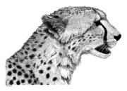Cheetah Print by Scott Woyak