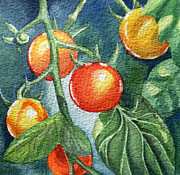 Watercolor By Irina Posters - Cherry Tomatoes Poster by Irina Sztukowski