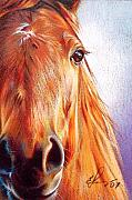 Horse Drawing Framed Prints - Chestnut Framed Print by Elena Kolotusha