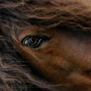 Equine Digital Art Posters - Child of the Sun Poster by Sharon Mau