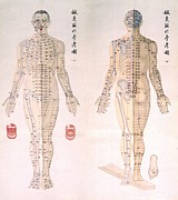 Anatomy Prints - Chinese Chart Of Acupuncture Points Print by Everett