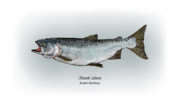 Salmon Drawings Posters - Chinook Salmon Poster by Ralph Martens