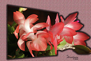 Christmas Cactus Print by EricaMaxine  Price