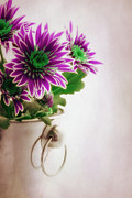 Purple Metal Prints - Chrysanthemums Metal Print by Kristin Kreet