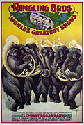 Circus Elephant Posters - CIRCUS POSTER, c1899 Poster by Granger