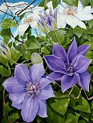 Vine Paintings - Clematis 2 by Jerrold Carton