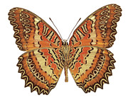 Comfortable Posters - Close-up Of A Butterfly Poster by Stockbyte