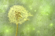 Wind Photos - Closeup of dandelion with seeds by Sandra Cunningham