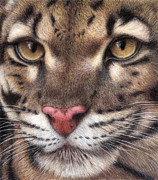 Cats Drawings Metal Prints - Clouded Leopard Metal Print by Pat Erickson