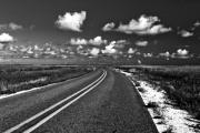 Cocodrie Highway Print by Scott Pellegrin