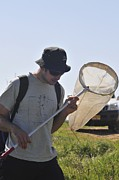 Gathering Photos - Collecting Insects by Photostock-israel