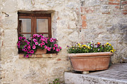 Rocca Posters - Colorful Flowers in Window Flower Box Poster by Jeremy Woodhouse