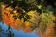 Nature Center Pond Prints - Colorful Reflections Print by LeeAnn McLaneGoetz McLaneGoetzStudioLLCcom