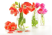 Vibrant Posters - Colorful spring tulips in old milk bottles Poster by Sandra Cunningham
