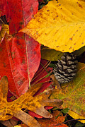 Leaf Collage Prints - Colors of Autumn Print by Andrew Soundarajan