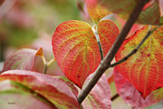 Red Leaves Photos - Colours of Autumn by Eena Bo