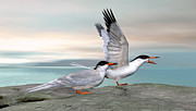Common Tern Print by Walter Colvin