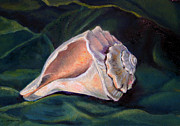 Conch Paintings - Conch Shell by Lyn Cook