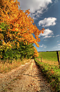 Autumn Country Road Posters - Country Road And Autumn Landscape Poster by Michal Boubin