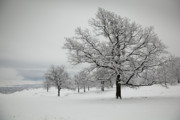 Wintry Photo Prints - Countryside Print by Gabriela Insuratelu