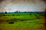 Cow Mixed Media Prints - Countryside Print by Svetlana Sewell