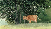 Signed Framed Prints - Cow in Pasture Framed Print by Winslow Homer