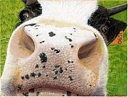Mammals Pastels Framed Prints - Cow No. 0651 Framed Print by Carol McCarty