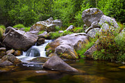 Peaceful Scenery Posters - Creek Poster by Carlos Caetano