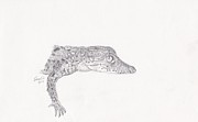 Reptiles Drawings Prints - Crocodile Hatchling Print by Sara Williams