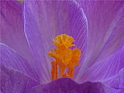Early Prints - Crocus Print by Juergen Roth