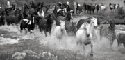 Horse Herd Photo Prints - Crossing French Creek - 3 Print by MH Ramona Swift