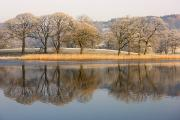 Trees Reflecting In Water Prints - Cumbria, England Lake Scenic With Print by John Short