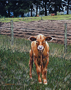 Barnyard Animal Paintings - Curious Calf by Rick McKinney