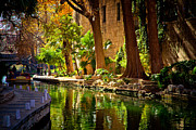 Riverwalk Prints - Cypress Trees in the Riverwalk Print by Iris Greenwell