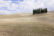 Tuscan Hills Framed Prints - Cypress Trees Framed Print by Jeremy Woodhouse