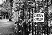Belfast Framed Prints - Cyprus Avenue Belfast as made famous by the Van Morrison song Framed Print by Joe Fox