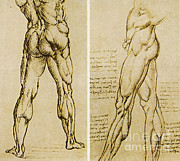 Leonardo Sketch Prints - Da Vinci Anatomical Drawings Print by Science Source