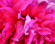 Awareness Digital Art Prints - Dahlia Print by Kristin Elmquist